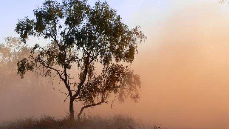 Tree with dust storm