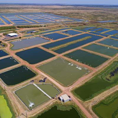 Aquaculture ponds, NT (CSIRO)