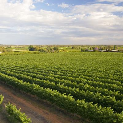 Overview of the vineyards and citrus crops near the township of Renmark